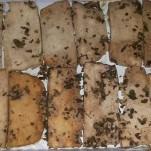 Tofu marinato – Ricette Vegane